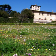 Spring outstanding blossoming meadow painted in Botticelli's venus